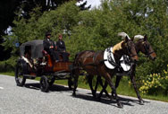 Horse and Cart wedding in Glenorchy